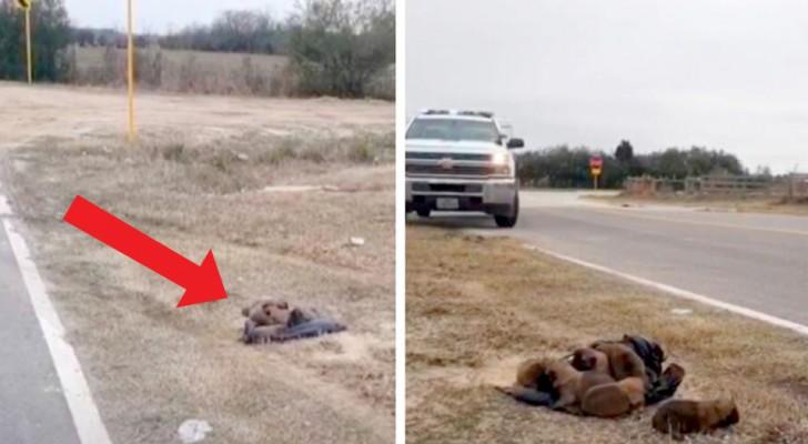 Un homme sans cœur abandonne 8 chiots sur le bord de la route, mais une fin heureuse les attend