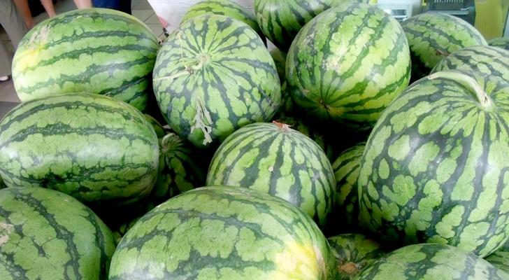 Veja como escolher a melancia perfeita!