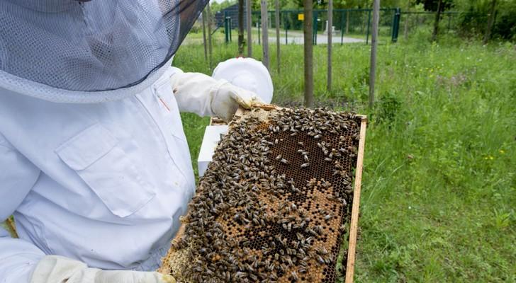 Nel 2019 raccolta di miele in Italia pari a zero, e la colpa è dei cambiamenti climatici