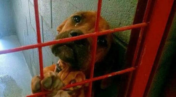 Scattano in canile una foto di questo cane con le lacrime agli occhi: poco dopo la foto gli cambierà la vita