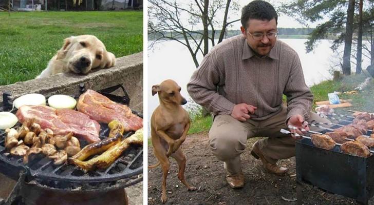 Cachorros que mendigam comida: 14 imagens que vão fazer você morrer de rir