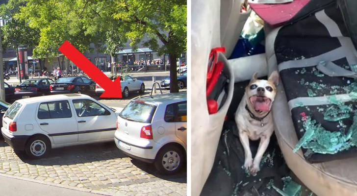 This little dog reported permanent brain damage due to the owner who had left it in the car in the sun