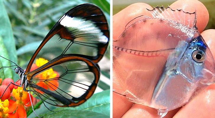 Queste 15 creature TRASPARENTI dimostrano che la Natura è un'artista straordinaria