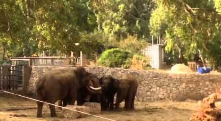 Elephants protect their young ones at the warning sirens for air strikes in Israel