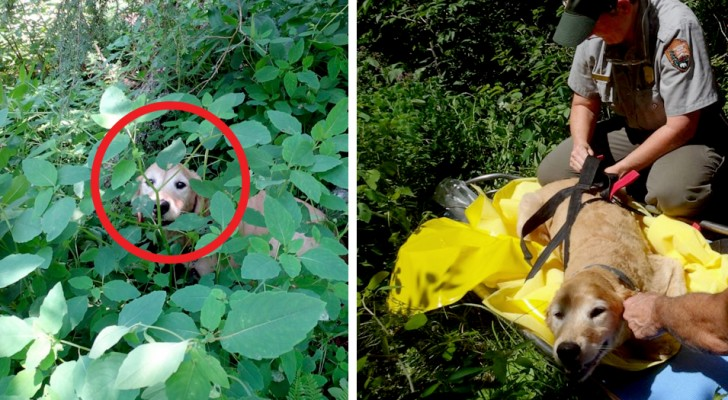 Questi escursionisti trovano nel bosco un cane smarrito da 11 giorni: la gioia è incontenibile