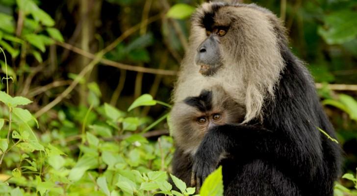 Dal 1970 ad oggi il numero degli animali che vivono nelle foreste tropicali si è dimezzato