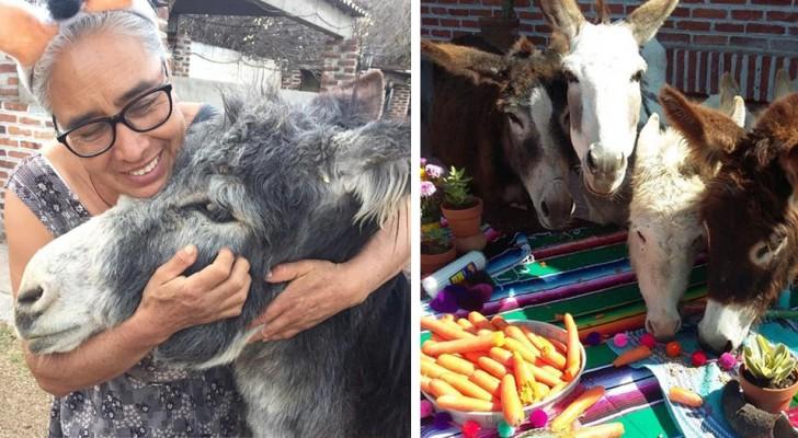 In Messico nasce un santuario per proteggere gli asini in via d'estinzione