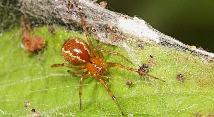Der Klimawandel könnte Spinnen aggressiver als üblich machen