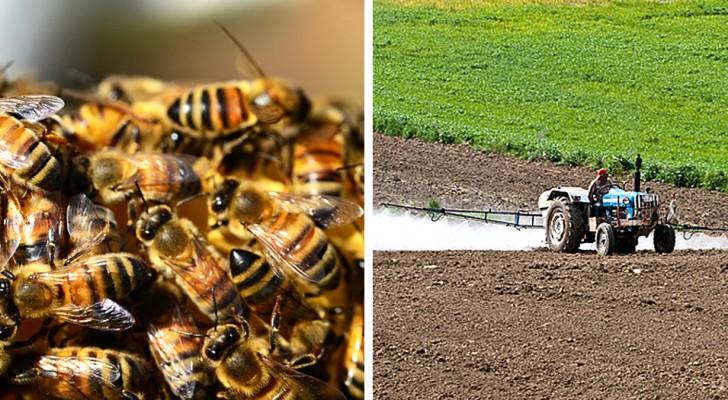 Brazilië heeft in slechts drie maanden een half miljard bijen verloren: de massale sterfte door pesticiden blijft maar doorgaan