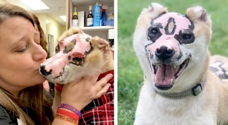 Die Geschichte von Taka, dem Hund, der einem Feuer entkommen ist und jetzt den Bedürftigen Freude bereitet