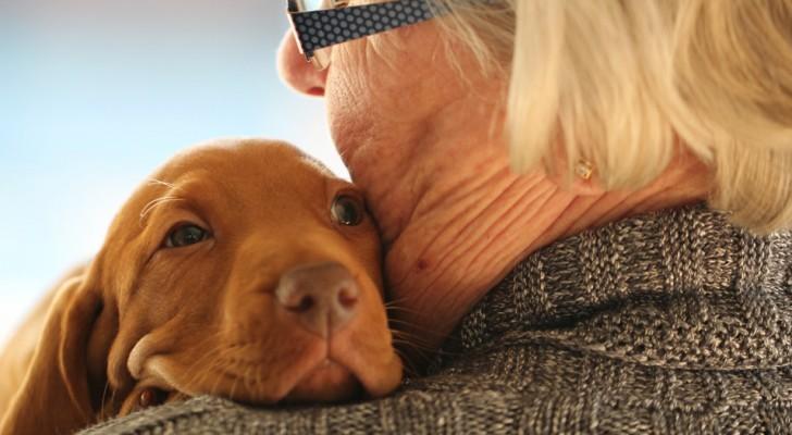 Därför är hundar så speciella - runt om i världen hyllas de på en speciell dag tillägnad dem