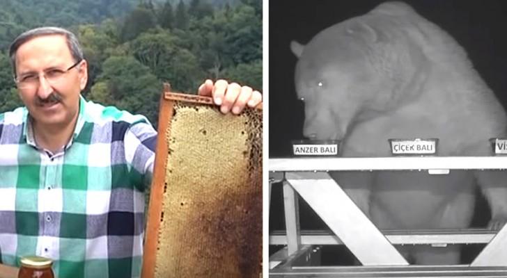 Orsi che degustano miele: ecco l'idea geniale di un apicoltore per tenerli lontani dagli alveari!