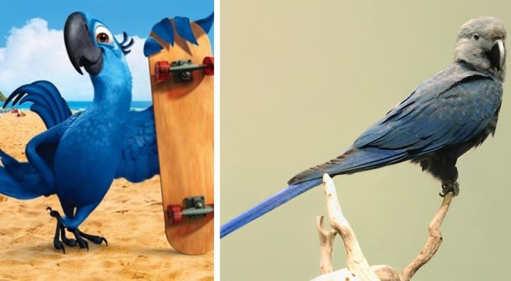 Adieu à l'Ara de Spix : le perroquet bleu qui a inspiré le film