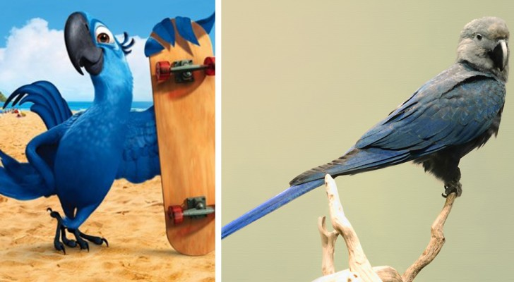 Vaarwel Spix' ara: de blauwe papegaai die de film