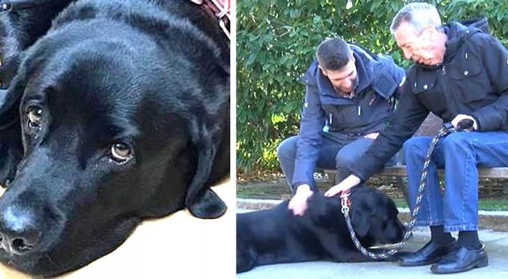 Het verhaal van Lass, de labrador die heeft geleerd zijn baasje met Alzheimer thuis te brengen