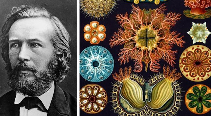 Queste incredibili illustrazioni dell'800 combinano Arte e Scienza con risultati sorprendenti