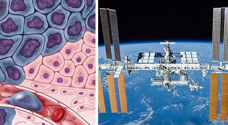 De afwezigheid van zwaartekracht doodt tumoren: de nieuwe grens van de strijd tegen kanker bevindt zich in de ruimte