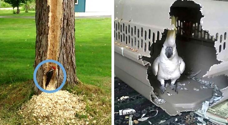 20 hilarische afbeeldingen laten zien dat vogels erg stout (en zelfs destructief) kunnen zijn