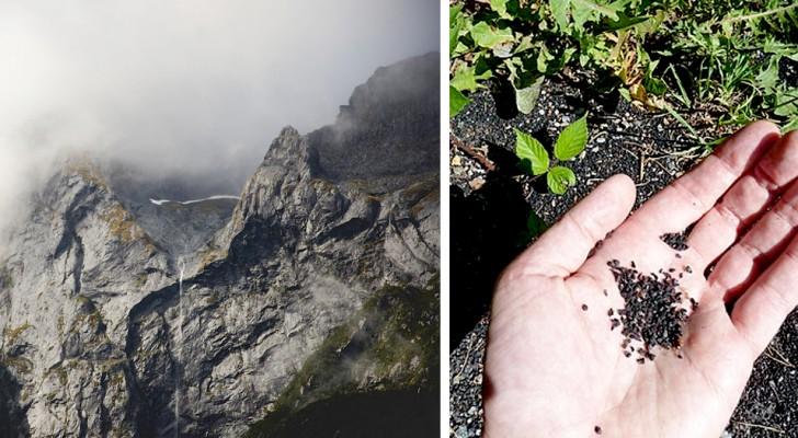 Een studie bevestigt dat het plastic regent in de Rocky Mountains in de Verenigde Staten