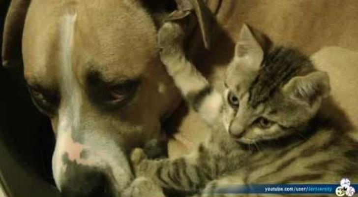Chien et chat: un rapport ami-ennemi vraiment mimi