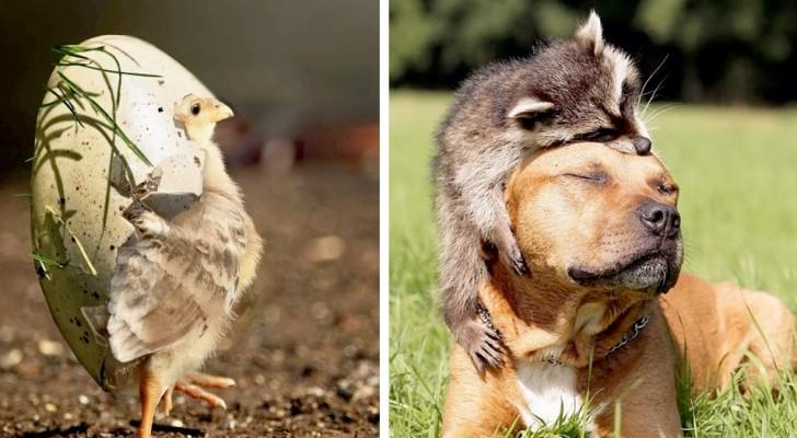 Questi animali dolcissimi illumineranno con un sorriso anche la vostra giornata più buia