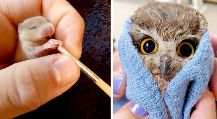 Dessa nyfödda djur är så små att de får plats i din hand