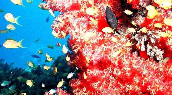In Costiera Amalfitana rubati 400 kg di corallo: per sanare il danno ci vorranno 50 anni