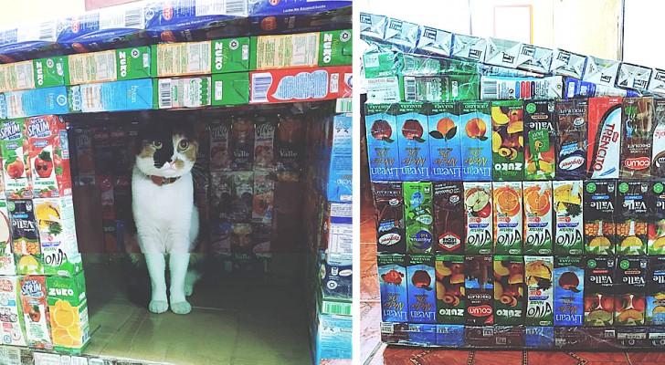 Cette fille crée des abris hermétiques pour les animaux errants à partir de vieux emballages de jus de fruits