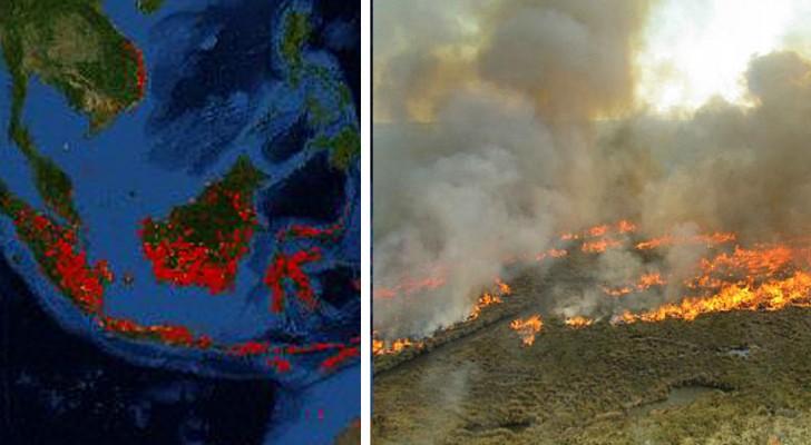Dopo Artico, Amazzonia e Africa, brucia anche l'Indonesia: i roghi servono per produrre olio di palma