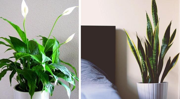 8 Pflanzen, die Sie zu Hause aufbewahren sollten, um die Schlafqualität zu verbessern, so die Forschung