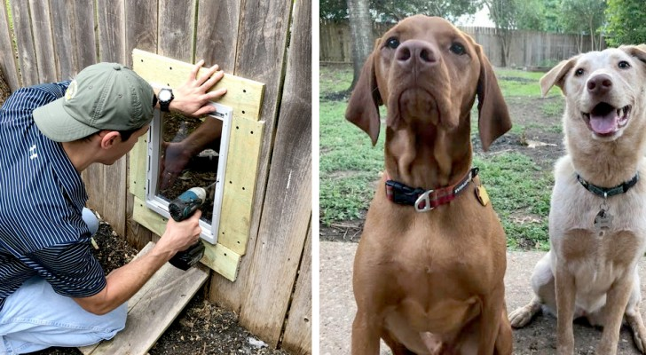 Zwei Nachbarn bauen eine Tür im Zaun, um ihre untrennbaren Hunde miteinander spielen zu lassen