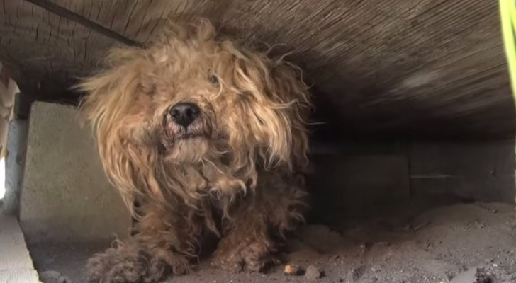 This dog waited for a year for his dead owner until someone noticed him!
