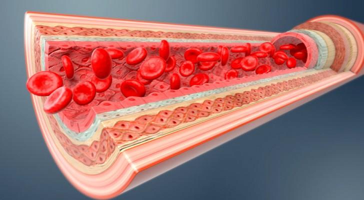 Découvert un hydrogel qui peut réparer les vaisseaux rompus et bloquer les hémorragies : les premiers tests sont encourageants