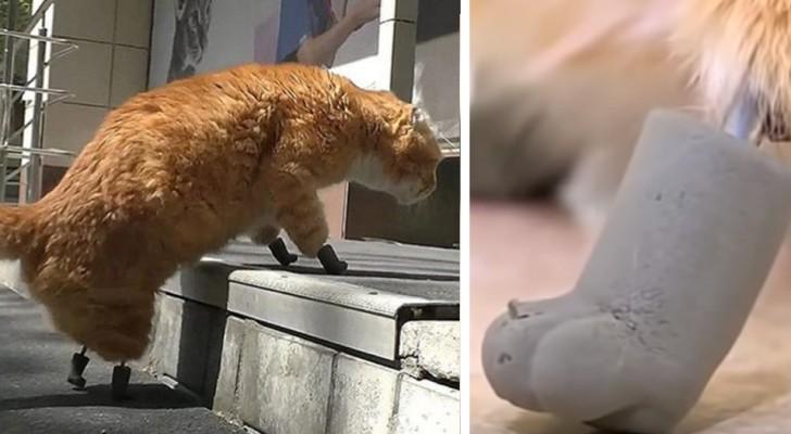 Il gelo aveva lasciato questo gatto invalido: ora è il primo al mondo ad avere quattro zampe bioniche