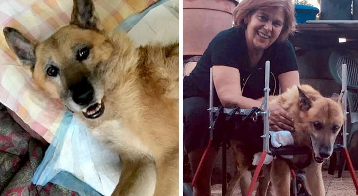 La storia di Lazzaro, cane maltrattato che