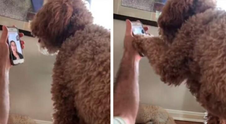 Een hond ziet zijn baasje na 12 dagen in een videogesprek en herkent haar