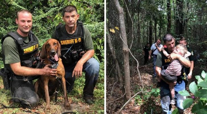 Questo segugio coraggioso ha ritrovato un bambino autistico di 3 anni che era scomparso nel bosco