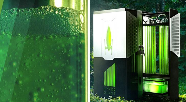 Dieser Bioreaktor ist in der Lage, das gleiche CO2 einzufangen, das 400 Bäume absorbieren