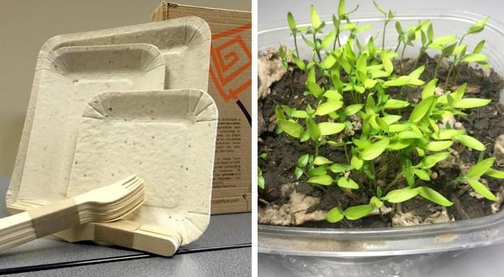 Papelyco, der 100% biologisch abbaubare Teller aus Ananasschalen, der sich in eine Blume verwandelt