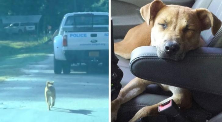 Um cachorro segue sempre o carro da polícia e acaba sendo contratado como animal de terapia para crianças