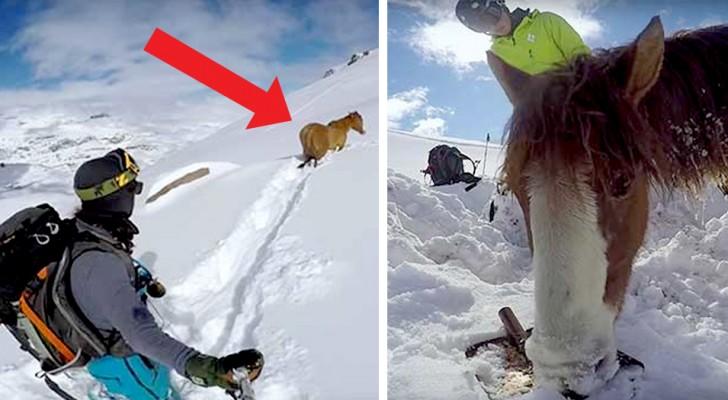 Incontra un cavallo bloccato nella neve da 4 giorni e lo aiuta a discendere a valle con una corda