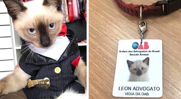 Ce chaton errant cherchait refuge dans un cabinet d'avocats, alors les avocats l'ont embauché