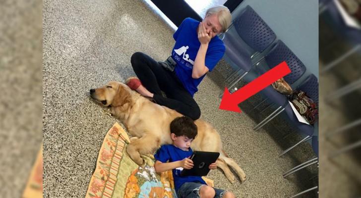 La mère éclate en larmes quand elle voit son fils autiste avec son chien de thérapie : Je ne l'ai jamais vu aussi tranquille