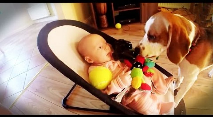 Deze puppy steelt speelgoed van de baby, waarna hij iets liefs doet om zijn fout te herstellen