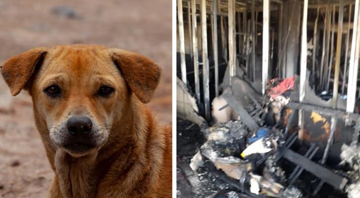 Gracias al gesto heroico de su perro, esta familia ha logrado a escapar por milagro a un incendio en la casa