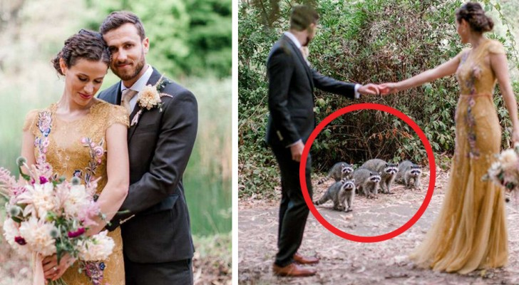 The photo shoot of two newlyweds was made even more memorable by the arrival of a raccoon family