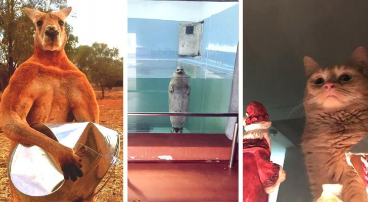 Il lato oscuro della natura: 20 foto inquietanti e divertenti di animali dall'aria minacciosa