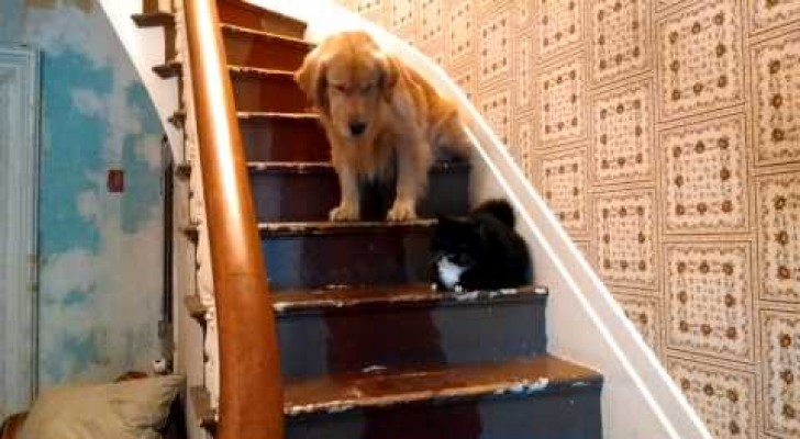 If the cat says you can't pass...you can't pass !