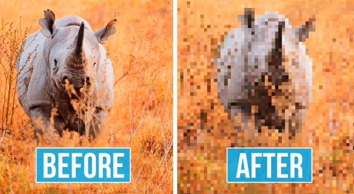 Photos d'animaux menacés d'extinction : le nombre de pixels correspond au nombre d'individus restants