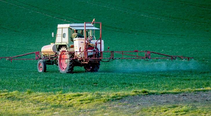 Le glyphosate utilisé dans les pesticides ne serait pas cancérigène : l'Union européenne l'a décrété